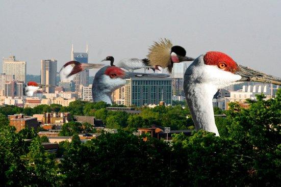 skyline cranes